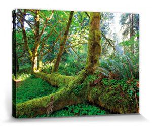 Wälder Poster Leinwandbild Auf Keilrahmen - Riesen-Wurzeln Im Regenwald (30 x 40 cm)