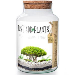 XXL Pflanzenterrarium- Nur noch Pflanze dazu - Fertig H 30 cm Pflanzglas Terrarium Pflanzen Pflanzschale Urban Jungle