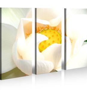 Bilder auf Leinwand Orchidee Blumen Natur Kunstdruck XXL Bild Poster Leinwandbilder Wandbilder