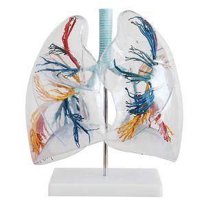 Lunge, 2-fach vergrößert, transparent von MedMod