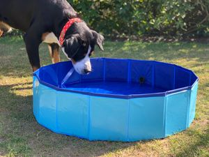Hundepool 80x20cm Badewanne Schwimmbecken Swimmingpool Planschbecken faltbar
